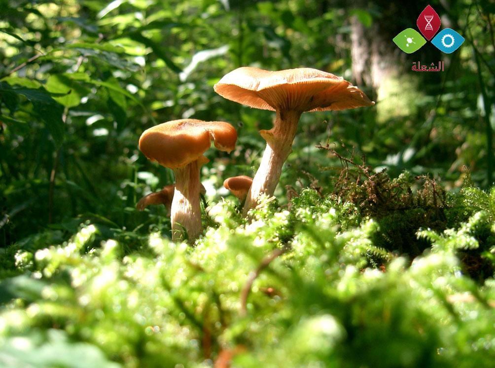النباتات و البيئة