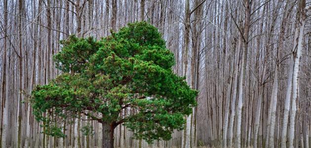 اهمية الاشجار لتنقية الهواء