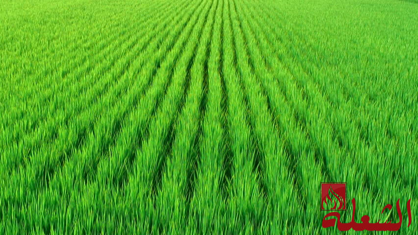 شركة تركيب وتوريد عشب صناعي بحائل