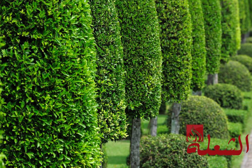 شركة تنسيق حدائق بنجران