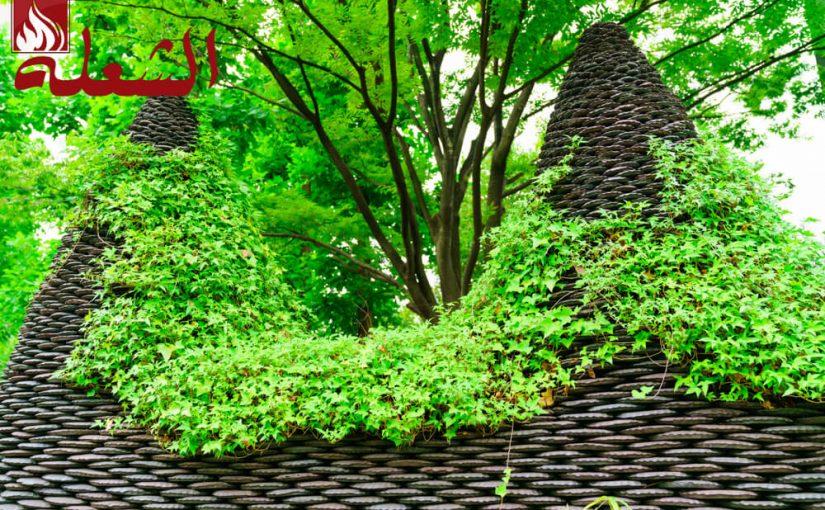شركة تصميم حدائق بنجران