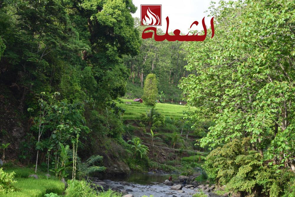 شركة تنسيق حدائق بالمدينه المنوره