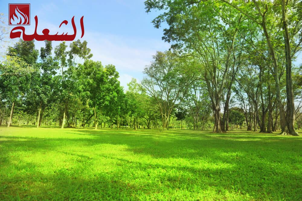 شركة تصميم حدائق بالمدينه المنوره