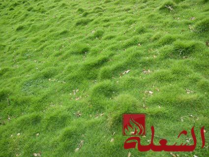 شركه تركيب وتوريد عشب طبيعي بالباحه
