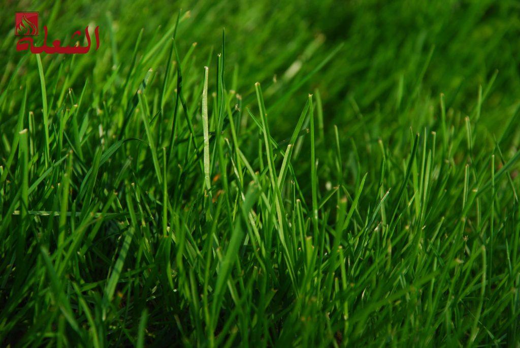 شركة تركيب وتوريد عشب صناعي بالمدينه المنوره