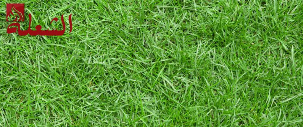 شركة تركيب وتوريد عشب طبيعي بحائل