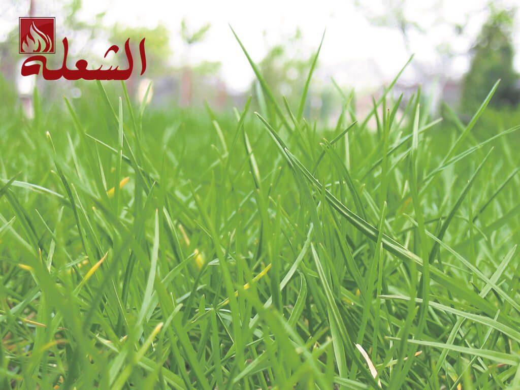شركة تركيب وتوريد عشب صناعي بالباحه