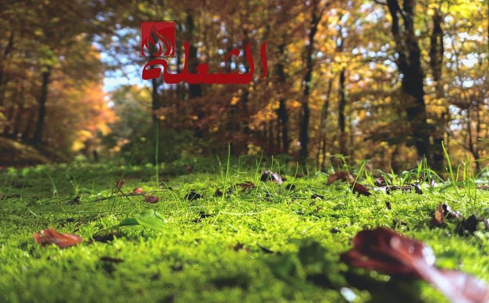 شركة تركيب وتوريد عشب طبيعي بالخرج