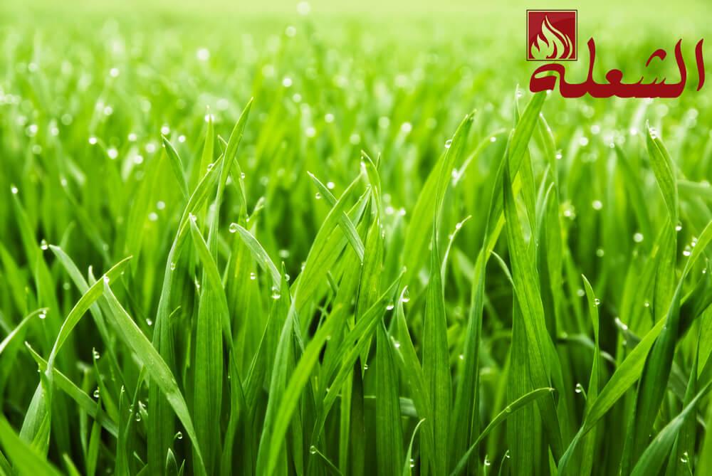 شركة تركيب وتوريد عشب صناعي بنجران