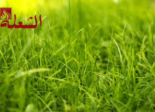 شركة تركيب وتوريد عشب صناعي بمكة
