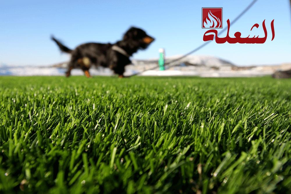 شركة تركيب وتوريد عشب طبيعي بالطائف