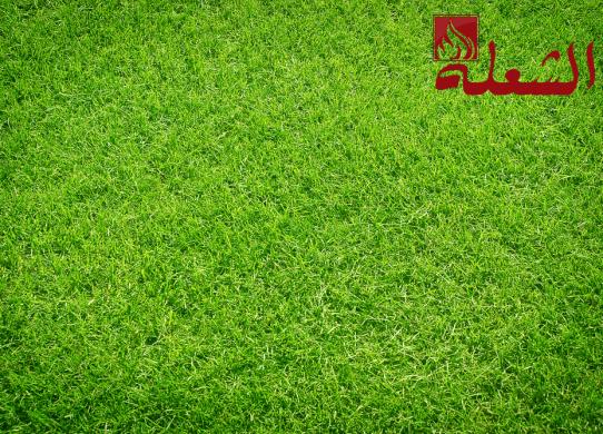 شركة تركيب وتوريد عشب طبيعي بجازان