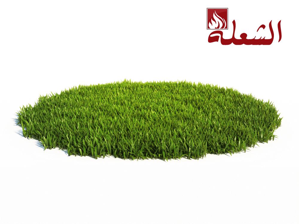 شركة تركيب وتوريد عشب طبيعي ببريدة