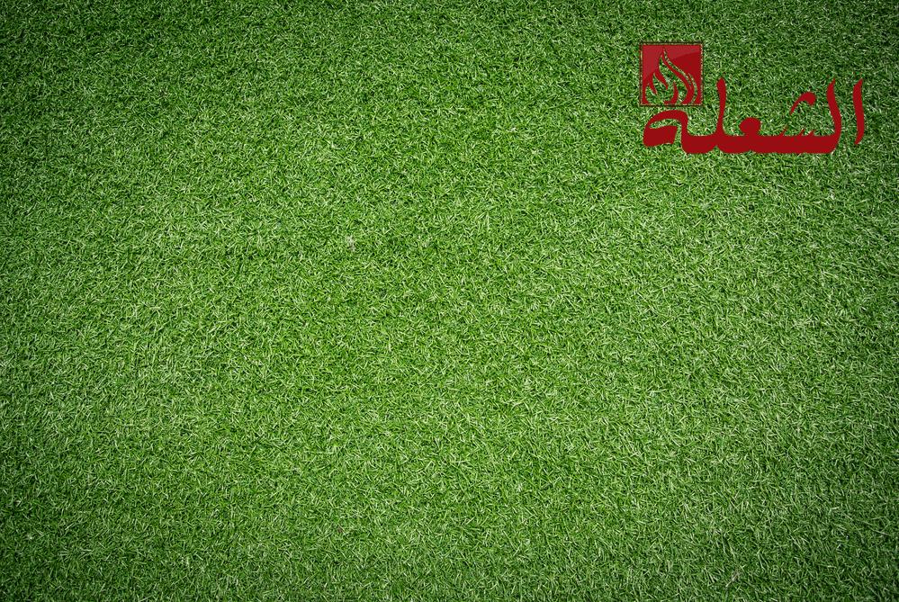 شركة تركيب وتوريد عشب طبيعي بالقصيم