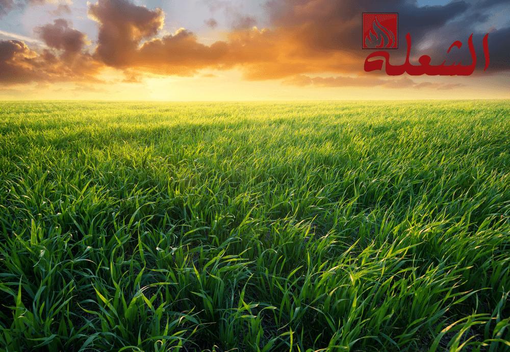 شركة تركيب وتوريد عشب طبيعي بمكة