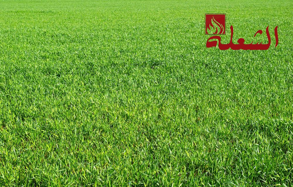 شركة تركيب وتوريد عشب طبيعي بجدة