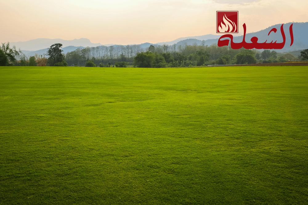 شركة تركيب وتوريد عشب طبيعي بابها