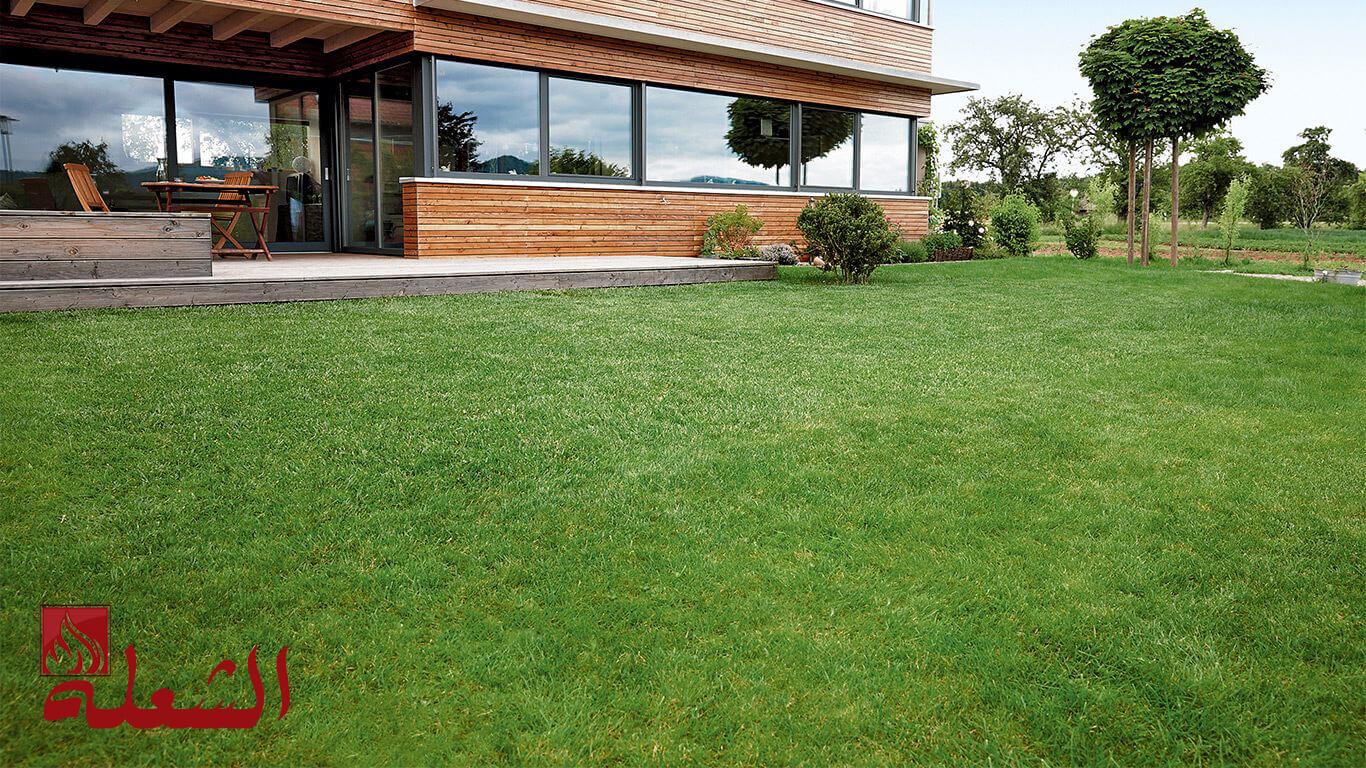 شركة تركيب وتوريد عشب طبيعي بتبوك